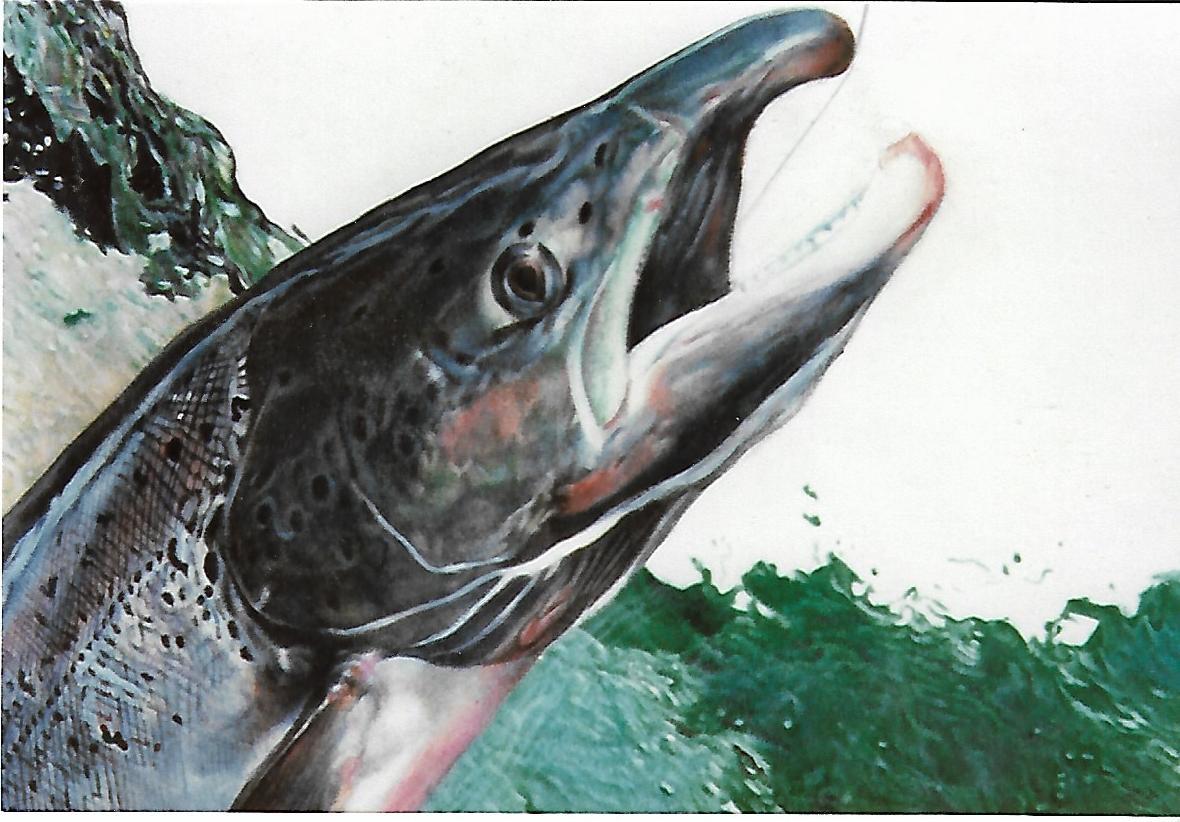 salmón-fragmento